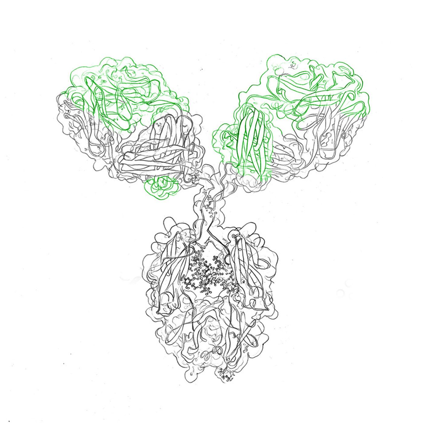 services recombinant antibodies